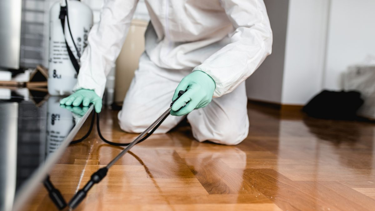 Best 30 Pest Control Companies in Singapore