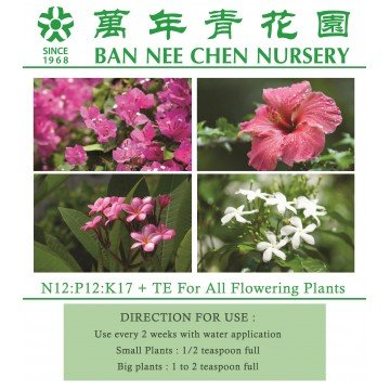 Best plant shops