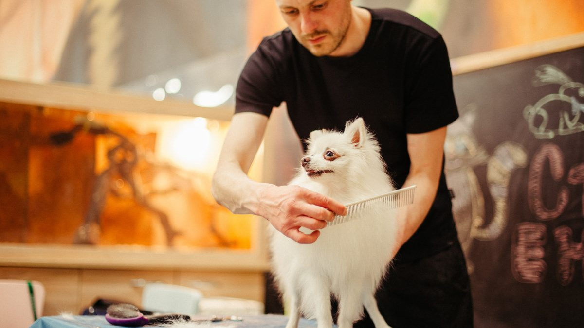Best 10 Dog Grooming Salons in Singapore
