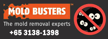 Image result for mold busters singapore
