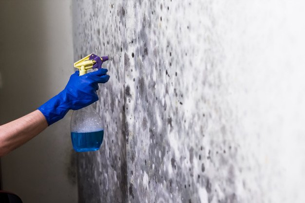 10 Best Mould Removal Services in Singapore [2021]