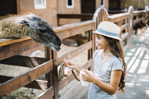10 Best Kid-Friendly Farm in Singapore for a fun learning experience
